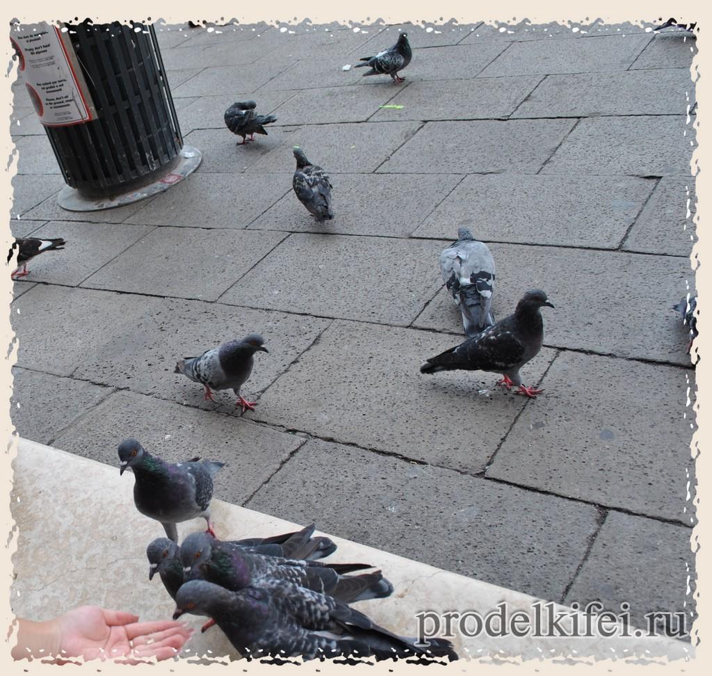 голубей в Венеции нельзя кормить - наглеют и портят памятники архитектуры
