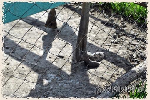 ноги страуса имеют три пальца
